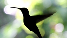 Google Hummingbird has meant that content marketing is now more important than ever.